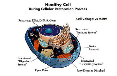 Healthy Cell