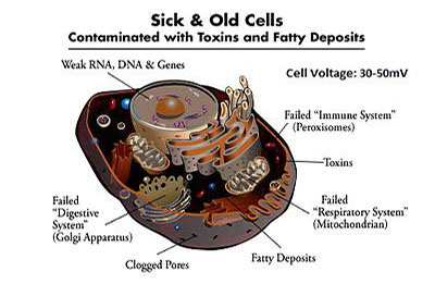 Sick and old Cells